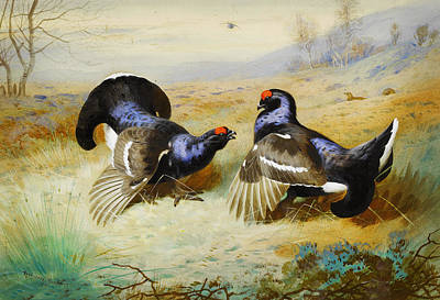 Horizontal Painting - Blackcocks At The Lek by Celestial Images