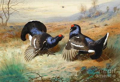 Scotland Painting - Blackcocks At The Lek by Pg Reproductions