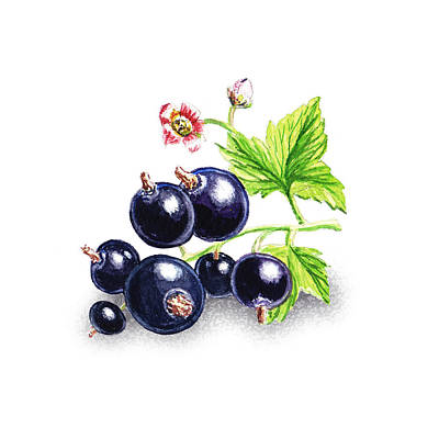 Blackcurrant Still Life Art Print by Irina Sztukowski