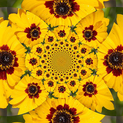 Photograph - Blackeyed Susan Kaleidoscope by Sheri McLeroy
