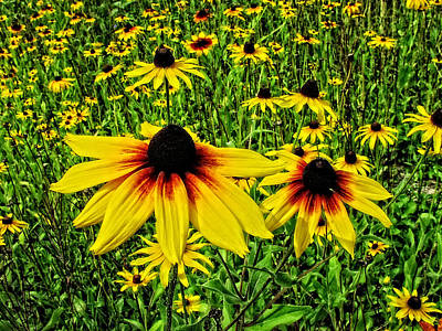 Photograph - Blackeyed Susans... by Mike Martin
