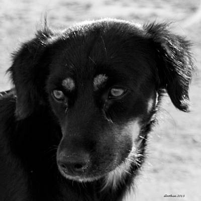 Photograph - Blackie by Dick Botkin