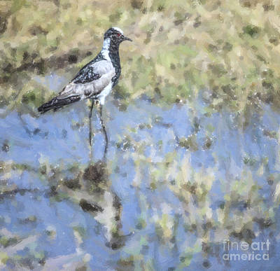 Lapwing Digital Art - Blacksmith Lapwing Or Plover Vanellus Armatus by Liz Leyden