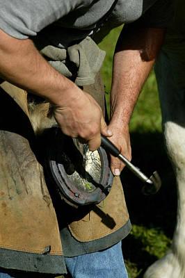 Blacksmith Shoeing A Percheron Horse Art Print by Gerard Lacz