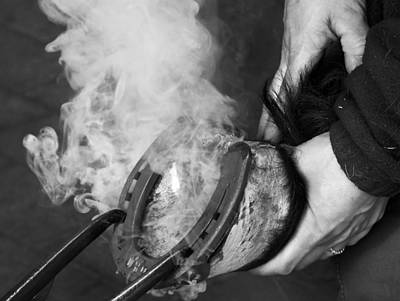 Photograph - Blacksmith With Horseshoe - Traditional Craft by Matthias Hauser