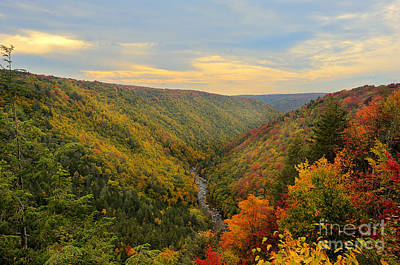Blackwater Gorge With Fall Leaves Art Print by Dan Friend