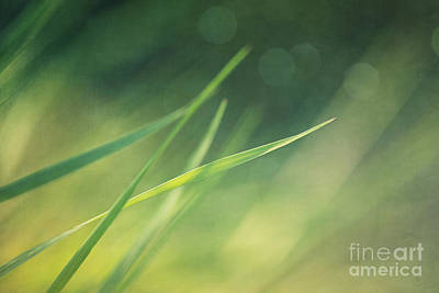 Summer Landscape Photograph - Blades Of Grass Bathing In The Sun by Priska Wettstein