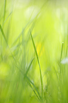 Springtime Photograph - Blades Of Grass - Green Spring Meadow - Abstract Soft Blurred by Matthias Hauser