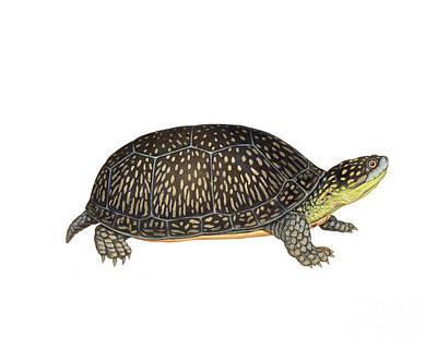 Blandings Turtle Art Print by Carlyn Iverson