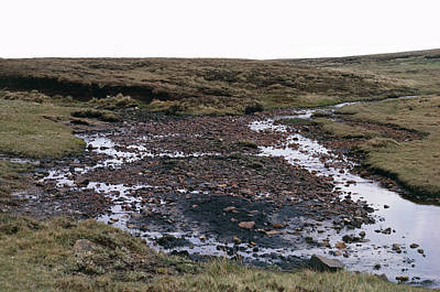 Bog Wall Art - Photograph - Blanket Bog Habitat. by G A Matthews/science Photo Library