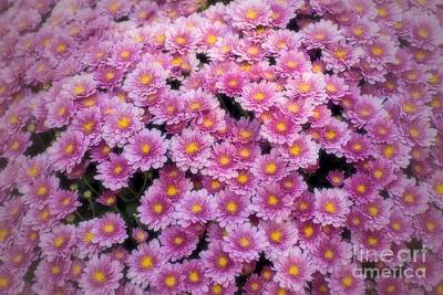 Photograph - Blanket Of Chrysanthemums  by Peggy Hughes
