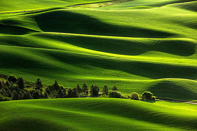 Photograph - Blanketed In Green by Todd Klassy