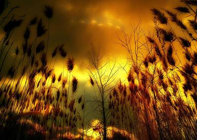 A Blaze Of Gold In Nature Art Print by Gothicrow Images
