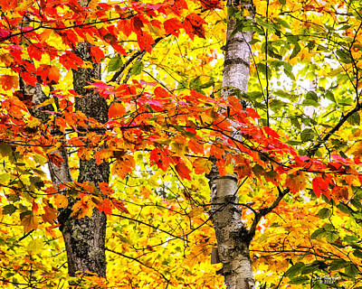 Photograph - Blazing Autumn Color by Peg Runyan