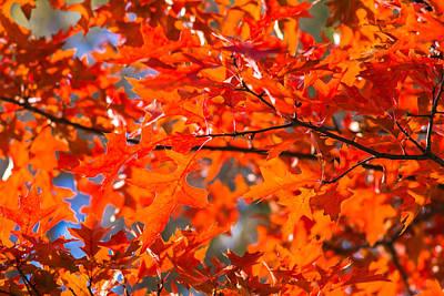 Blazing Sun Photograph - Blazing Maple by Alexander Senin