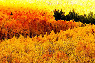 Blazing Mountainside Art Print by The Forests Edge Photography - Diane Sandoval