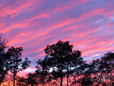 Art Print featuring the photograph Blazing Pines by Joy Hardee
