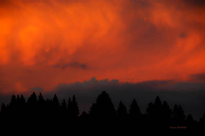 Photograph - Blazing Sky by Donna Blackhall