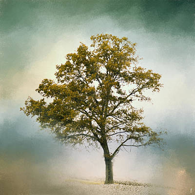 Photograph - Bleached Sage Green Cotton Field Tree - Landscape by Jai Johnson