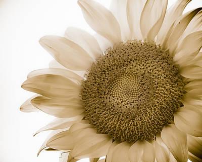 Bleached Sunflower Art Print