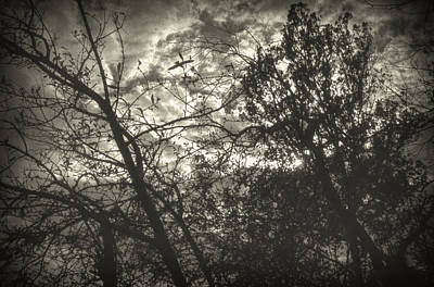 Photograph - Bleak by Taylan Apukovska