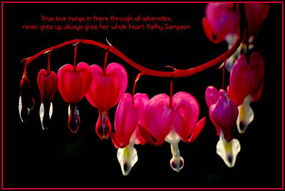 Photograph - Bleeding Heart Quote by Kathy Sampson