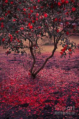 Dreamy Pink Park Scene Photograph - Bleeding Tree by Svetlana Sewell