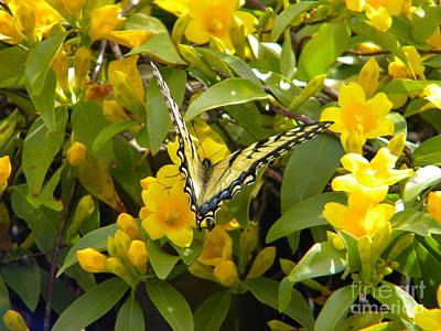 Photograph - Blending In by Jaclyn Hughes Fine Art