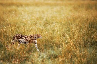 Cheetah Wall Art - Photograph - Blending by Richard Susanto