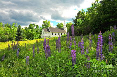 Blessed Are The Lupine Art Print by Catherine Reusch Daley