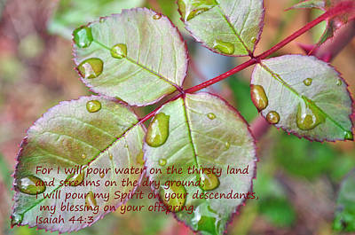 Photograph - Blessings by Tikvah's Hope