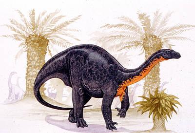 Paleozoology Photograph - Blikanasaurus Dinosaur by Deagostini/uig