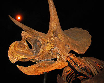 Photograph - Blind Date. Triceratops Horridus by Connie Fox