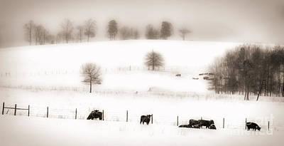 Photograph - Blizzard by Dan Carmichael