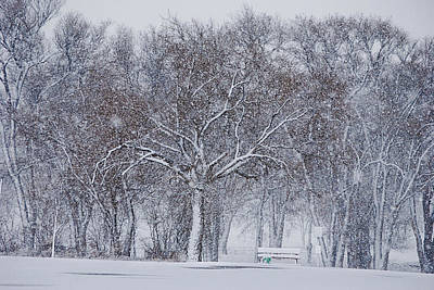 Photograph - Blizzard In The Park by Melany Sarafis