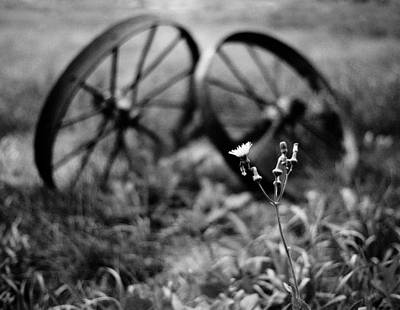 Bllooming Dandelion Against Rusty Metal Wheels Art Print by Donald  Erickson