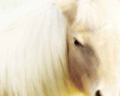 Close Up Horses Photograph - Blondie by Amy Tyler