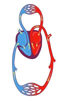 Blood Circulation Art Print by Jeanette Engqvist