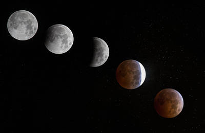 Photograph - Blood Moon by Angie Vogel