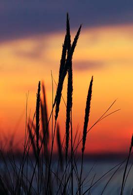 Photograph - Blood Orange Sky by Pete Federico