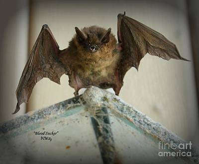Photograph - Gone Batty by Patrick Witz