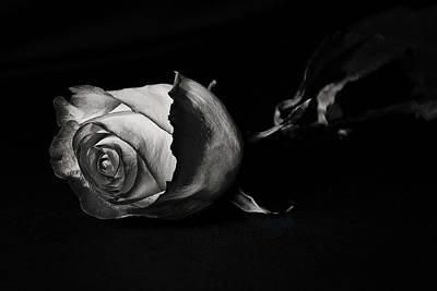 Photograph - Bloodless Rose by Vanessa Valdes