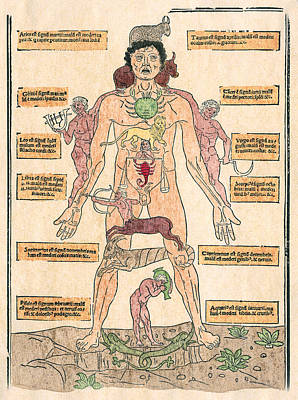Photograph - Bloodletting Chart, 1493 by Granger