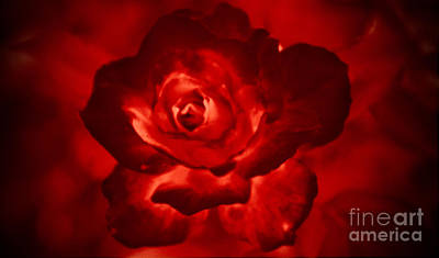 Photograph - Bloody Rose by Elizabeth Winter