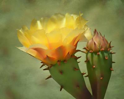 Spiky Petals Photograph - Bloom And Bud by Nikolyn McDonald