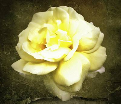 Photograph - Bloom In Full by Cathie Tyler