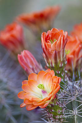 Art Print featuring the photograph Bloom In Orange by Bryan Keil