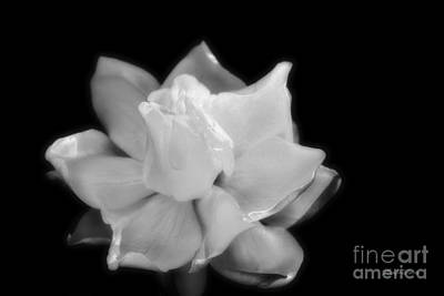 Photograph - Bloom Of Love And Romance by Michelle Constantine