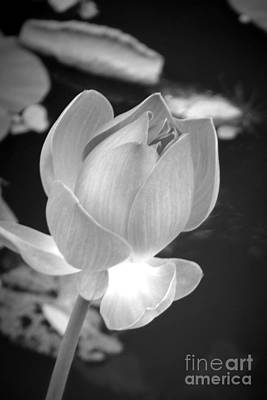 Photograph - Bloom by Shawna Gibson
