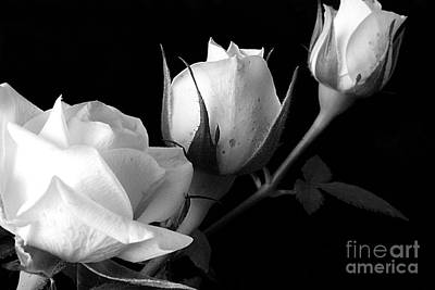 Photograph - Bloomin' Roses by Arizona  Lowe